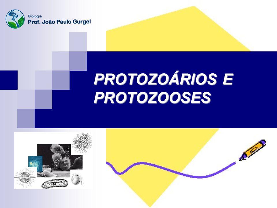 PROTOZOÁRIOS Designação coletiva para unicelulares eucariontes heterótrofos (Reino Protista) que obtêm seus alimentos por ingestão ou absorção.