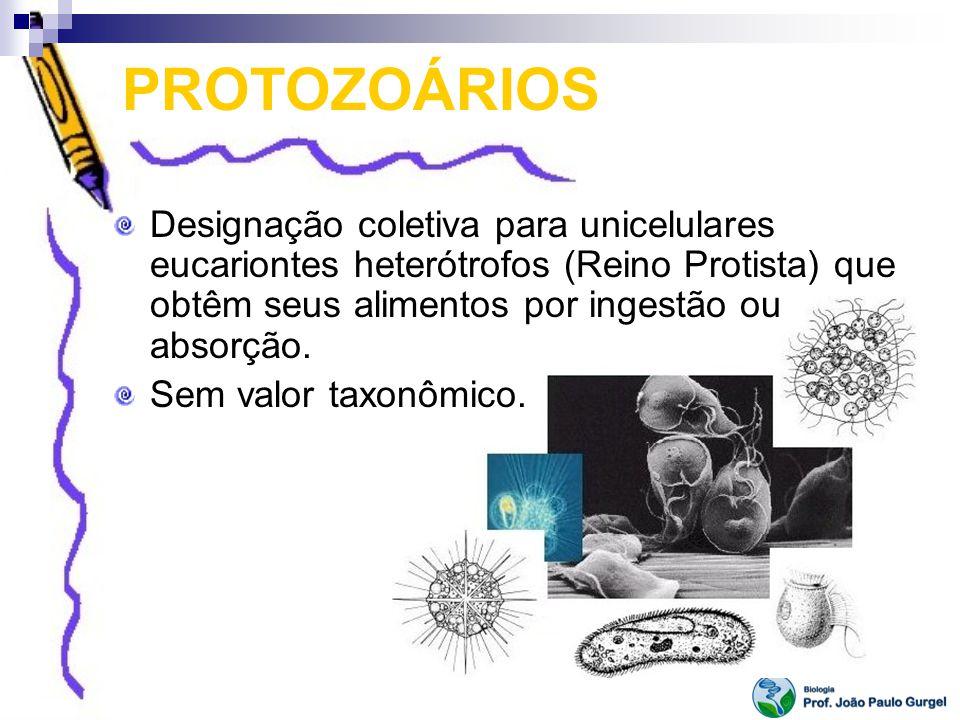 PROTOZOÁRIOS Designação coletiva para unicelulares eucariontes heterótrofos (Reino Protista) que obtêm seus alimentos por ingestão ou absorção. Sem va
