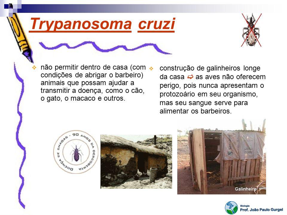 Trypanosoma cruzi não permitir dentro de casa (com condições de abrigar o barbeiro) animais que possam ajudar a transmitir a doença, como o cão, o gat