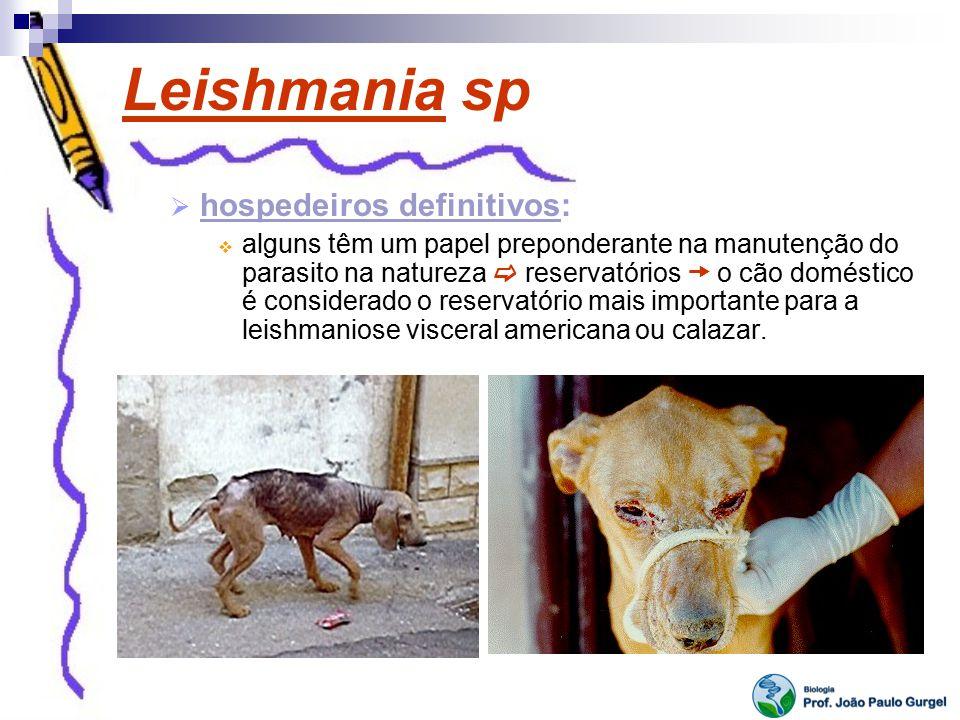 Leishmania sp hospedeiros definitivos: alguns têm um papel preponderante na manutenção do parasito na natureza reservatórios o cão doméstico é conside