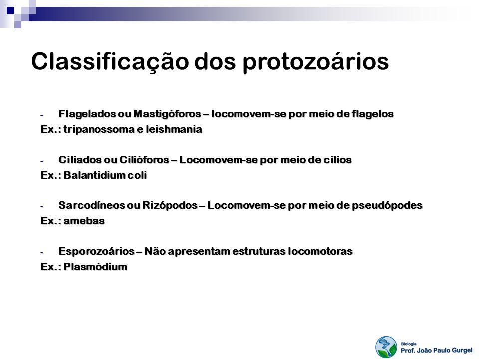 Classificação dos protozoários - Flagelados ou Mastigóforos – locomovem-se por meio de flagelos Ex.: tripanossoma e leishmania - Ciliados ou Cilióforo