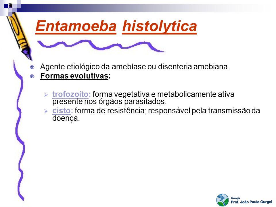 Entamoeba histolytica Agente etiológico da amebíase ou disenteria amebiana. Formas evolutivas: trofozoíto: forma vegetativa e metabolicamente ativa pr