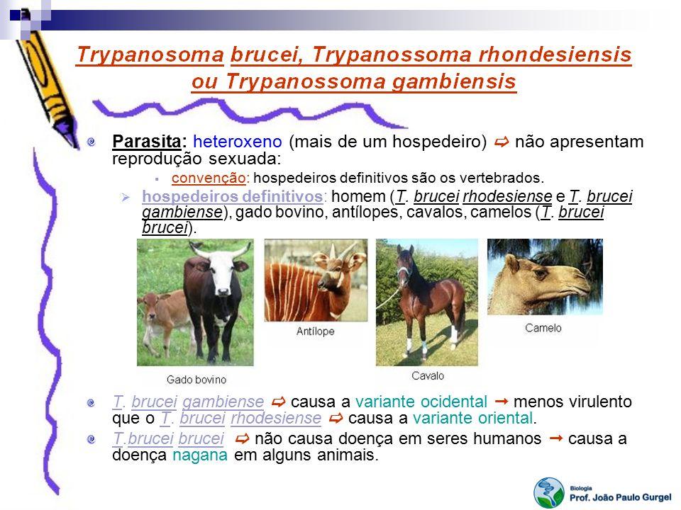 Parasita: heteroxeno (mais de um hospedeiro) não apresentam reprodução sexuada: convenção: hospedeiros definitivos são os vertebrados. hospedeiros def