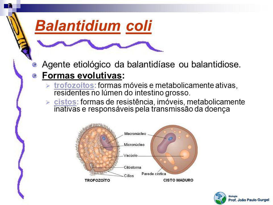 Balantidium coli Agente etiológico da balantidíase ou balantidiose. Formas evolutivas: trofozoítos: formas móveis e metabolicamente ativas, residentes