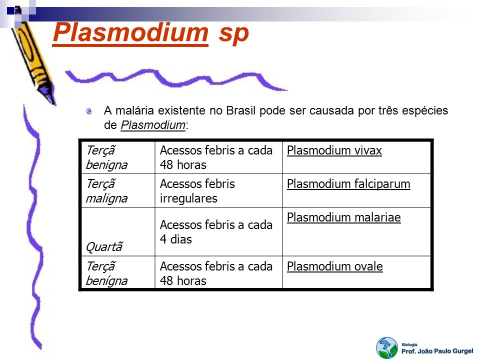 Plasmodium sp A malária existente no Brasil pode ser causada por três espécies de Plasmodium: Terçã benigna Acessos febris a cada 48 horas Plasmodium