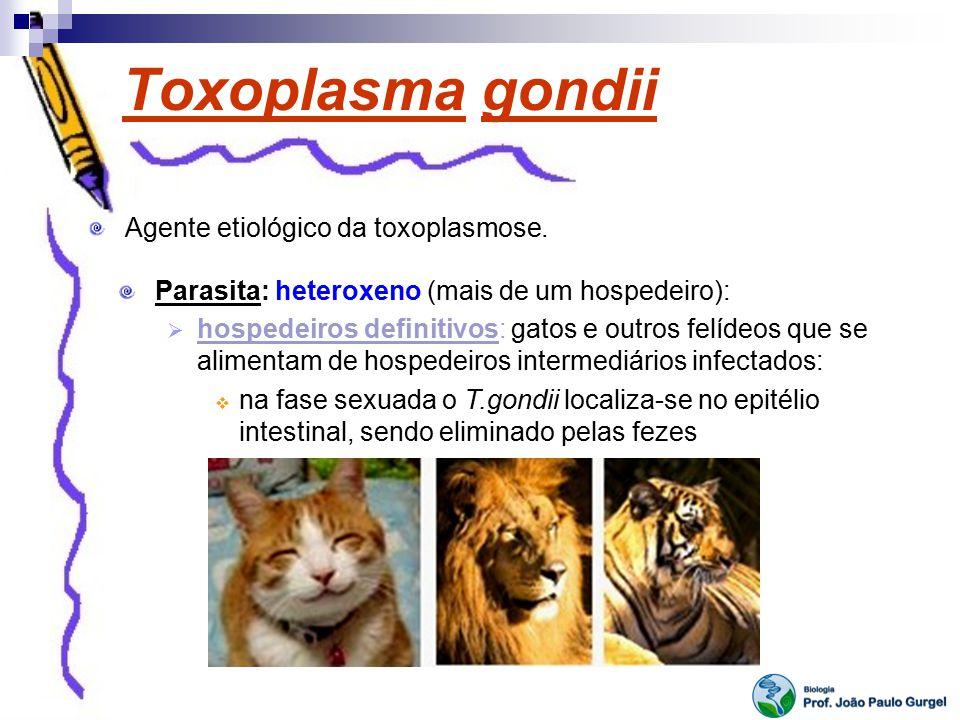 Toxoplasma gondii Agente etiológico da toxoplasmose. Parasita: heteroxeno (mais de um hospedeiro): hospedeiros definitivos: gatos e outros felídeos qu