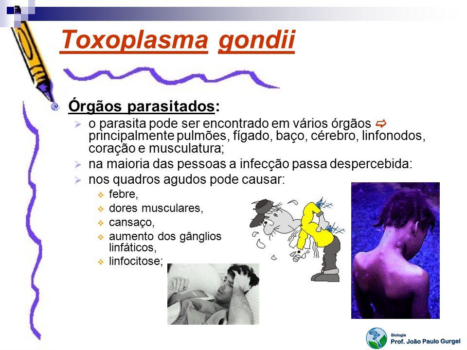 Toxoplasma gondii Órgãos parasitados: o parasita pode ser encontrado em vários órgãos principalmente pulmões, fígado, baço, cérebro, linfonodos, coraç