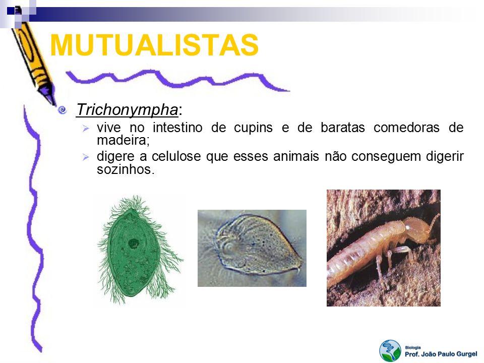 MUTUALISTAS Trichonympha: vive no intestino de cupins e de baratas comedoras de madeira; digere a celulose que esses animais não conseguem digerir soz