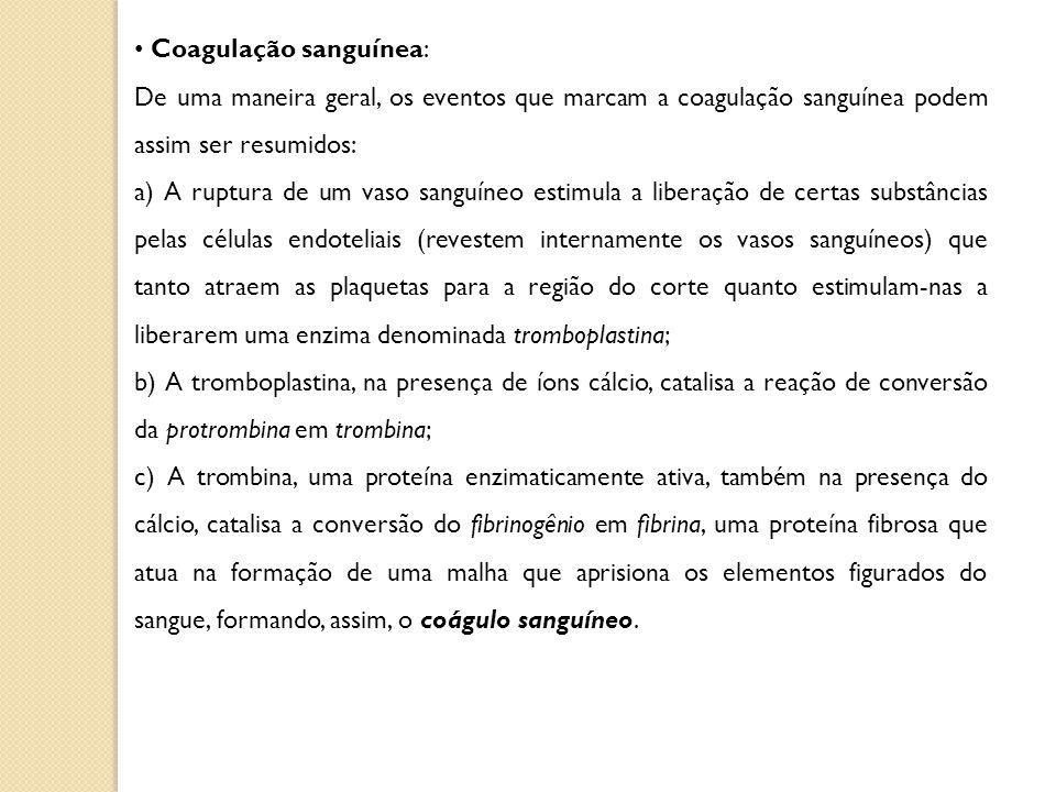 Coagulação sanguínea: De uma maneira geral, os eventos que marcam a coagulação sanguínea podem assim ser resumidos: a) A ruptura de um vaso sanguíneo estimula a liberação de certas substâncias pelas células endoteliais (revestem internamente os vasos sanguíneos) que tanto atraem as plaquetas para a região do corte quanto estimulam-nas a liberarem uma enzima denominada tromboplastina; b) A tromboplastina, na presença de íons cálcio, catalisa a reação de conversão da protrombina em trombina; c) A trombina, uma proteína enzimaticamente ativa, também na presença do cálcio, catalisa a conversão do fibrinogênio em fibrina, uma proteína fibrosa que atua na formação de uma malha que aprisiona os elementos figurados do sangue, formando, assim, o coágulo sanguíneo.
