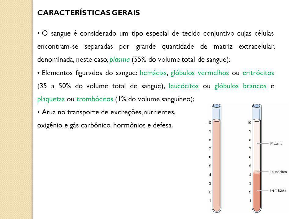 CARACTERÍSTICAS GERAIS O sangue é considerado um tipo especial de tecido conjuntivo cujas células encontram-se separadas por grande quantidade de matriz extracelular, denominada, neste caso, plasma (55% do volume total de sangue); Elementos figurados do sangue: hemácias, glóbulos vermelhos ou eritrócitos (35 a 50% do volume total de sangue), leucócitos ou glóbulos brancos e plaquetas ou trombócitos (1% do volume sanguíneo); Atua no transporte de excreções, nutrientes, oxigênio e gás carbônico, hormônios e defesa.