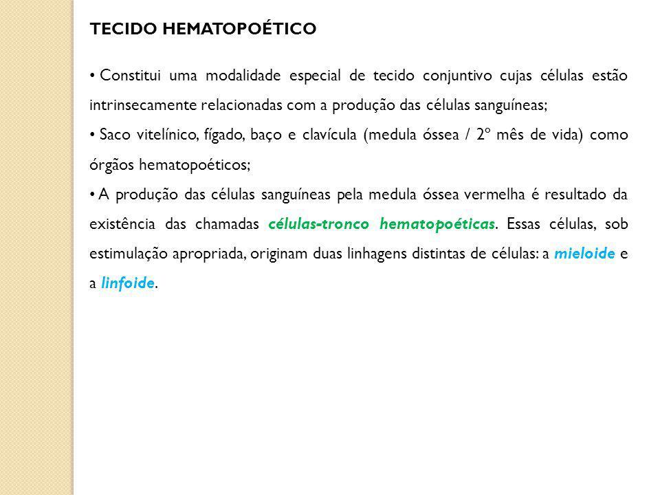 TECIDO HEMATOPOÉTICO Constitui uma modalidade especial de tecido conjuntivo cujas células estão intrinsecamente relacionadas com a produção das células sanguíneas; Saco vitelínico, fígado, baço e clavícula (medula óssea / 2º mês de vida) como órgãos hematopoéticos; A produção das células sanguíneas pela medula óssea vermelha é resultado da existência das chamadas células-tronco hematopoéticas.