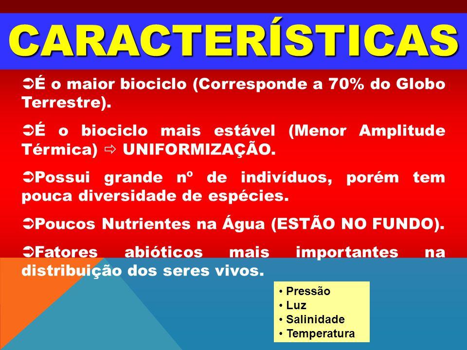 CARACTERÍSTICAS É o maior biociclo (Corresponde a 70% do Globo Terrestre). É o biociclo mais estável (Menor Amplitude Térmica) UNIFORMIZAÇÃO. Possui g