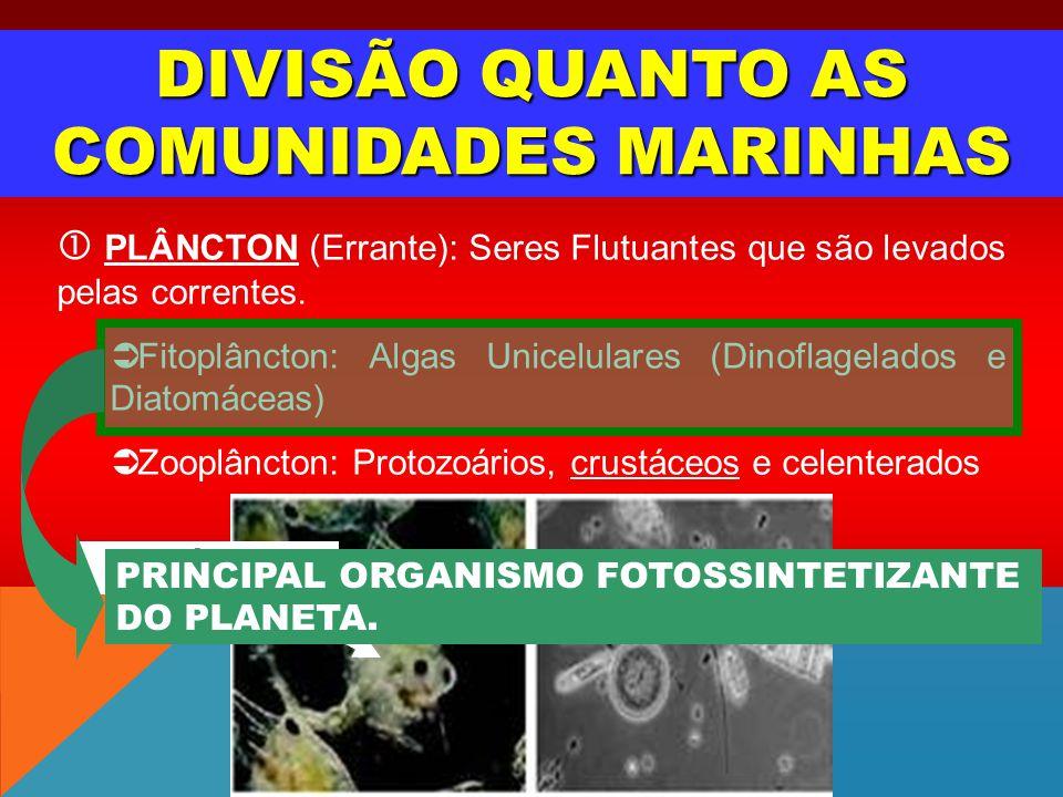 DIVISÃO QUANTO AS COMUNIDADES MARINHAS PLÂNCTON (Errante): Seres Flutuantes que são levados pelas correntes. Fitoplâncton: Algas Unicelulares (Dinofla