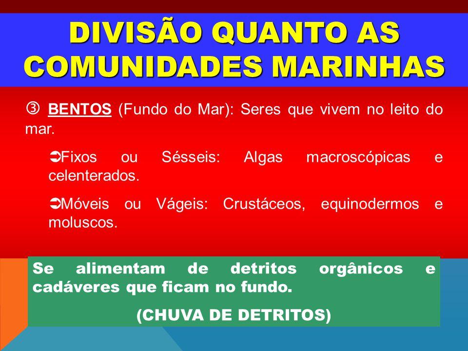 DIVISÃO QUANTO AS COMUNIDADES MARINHAS BENTOS (Fundo do Mar): Seres que vivem no leito do mar. Fixos ou Sésseis: Algas macroscópicas e celenterados. M