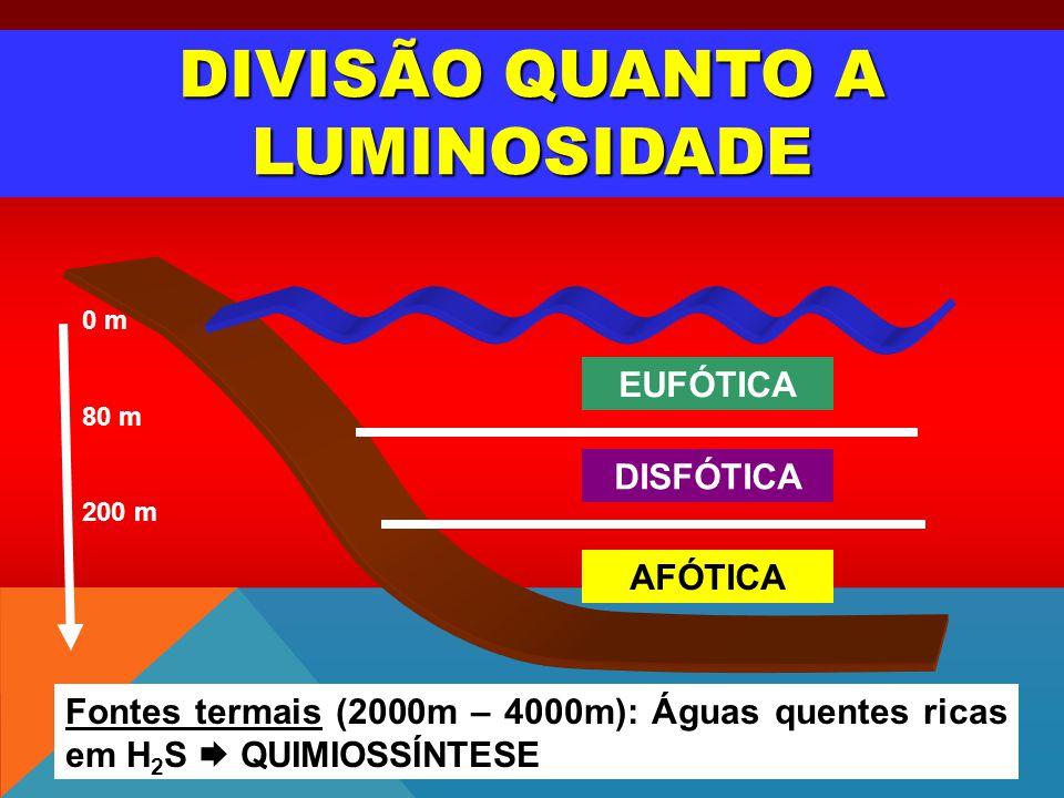 DIVISÃO QUANTO A LUMINOSIDADE 0 m 80 m 200 m EUFÓTICA DISFÓTICA AFÓTICA Fontes termais (2000m – 4000m): Águas quentes ricas em H 2 S QUIMIOSSÍNTESE