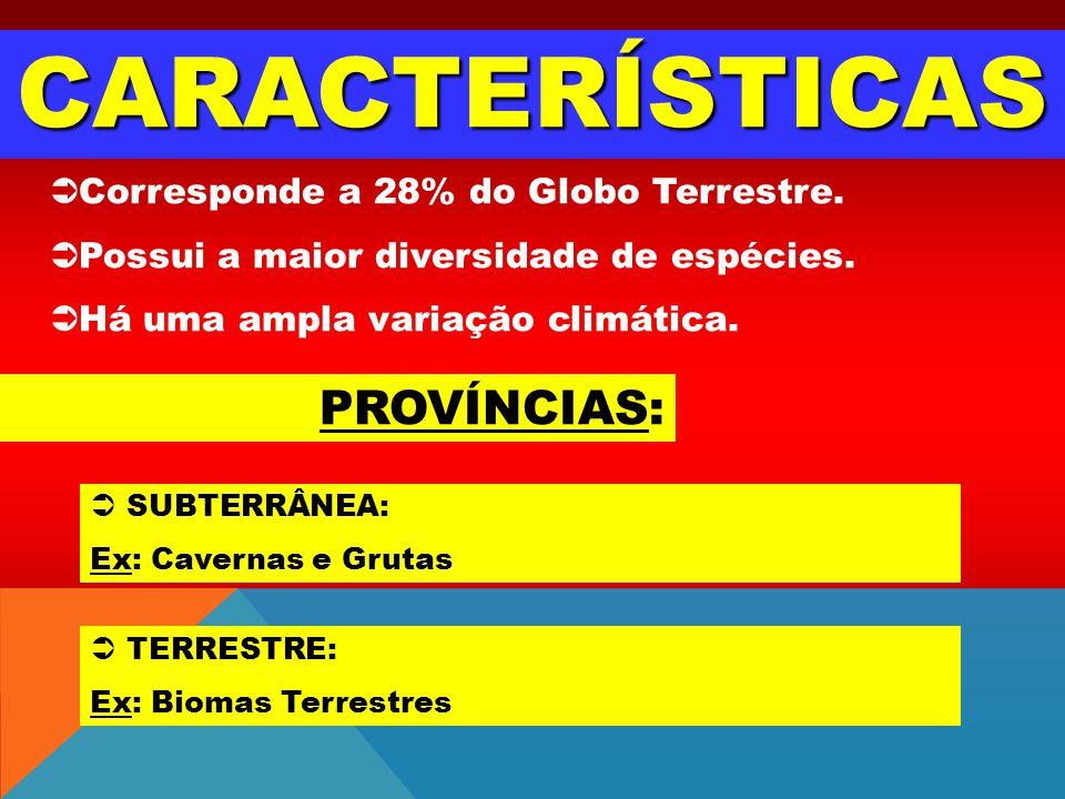 CARACTERÍSTICAS Corresponde a 28% do Globo Terrestre. Possui a maior diversidade de espécies. Há uma ampla variação climática. PROVÍNCIAS: SUBTERRÂNEA