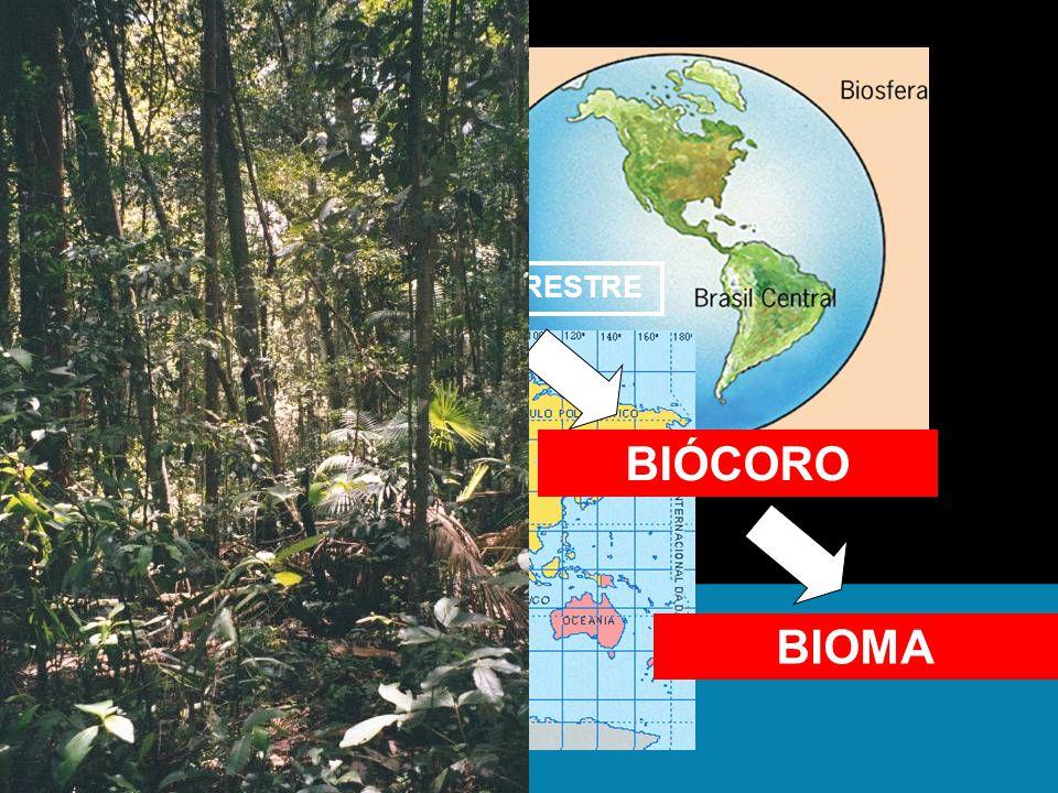 BIOSFERA BIOCICLO TERRESTRE FLORESTAS FLORESTA TROPICAL BIÓCORO BIOMA
