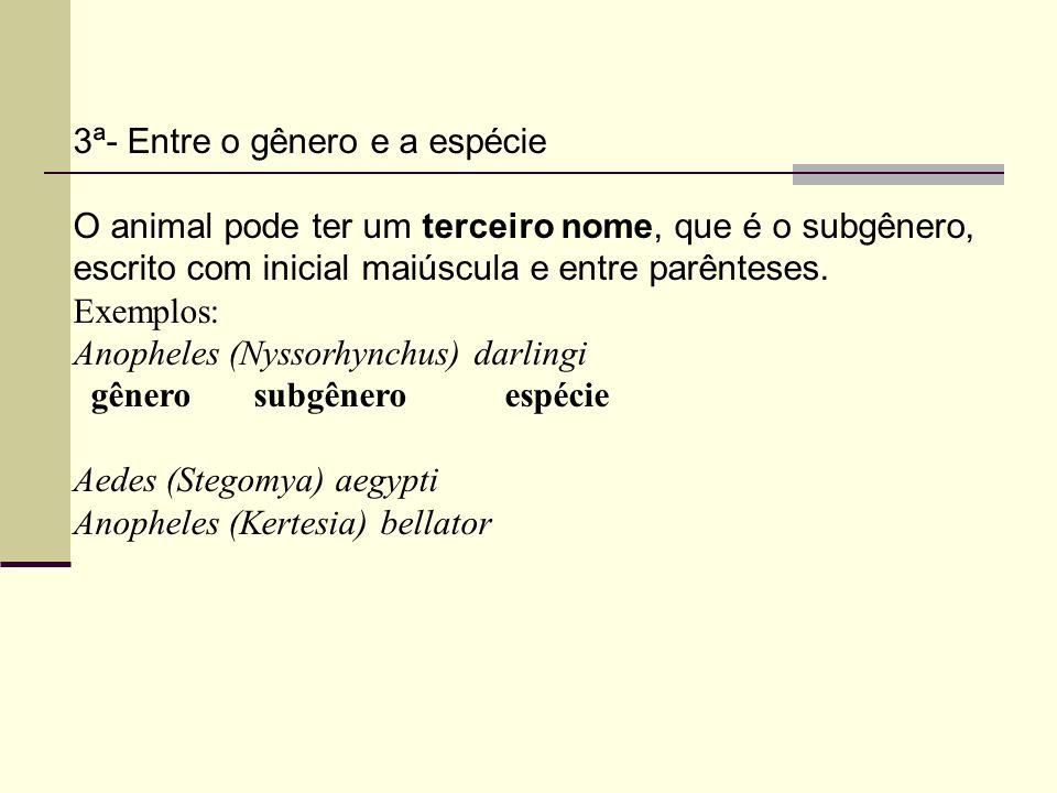 3ª- Entre o gênero e a espécie O animal pode ter um terceiro nome, que é o subgênero, escrito com inicial maiúscula e entre parênteses.