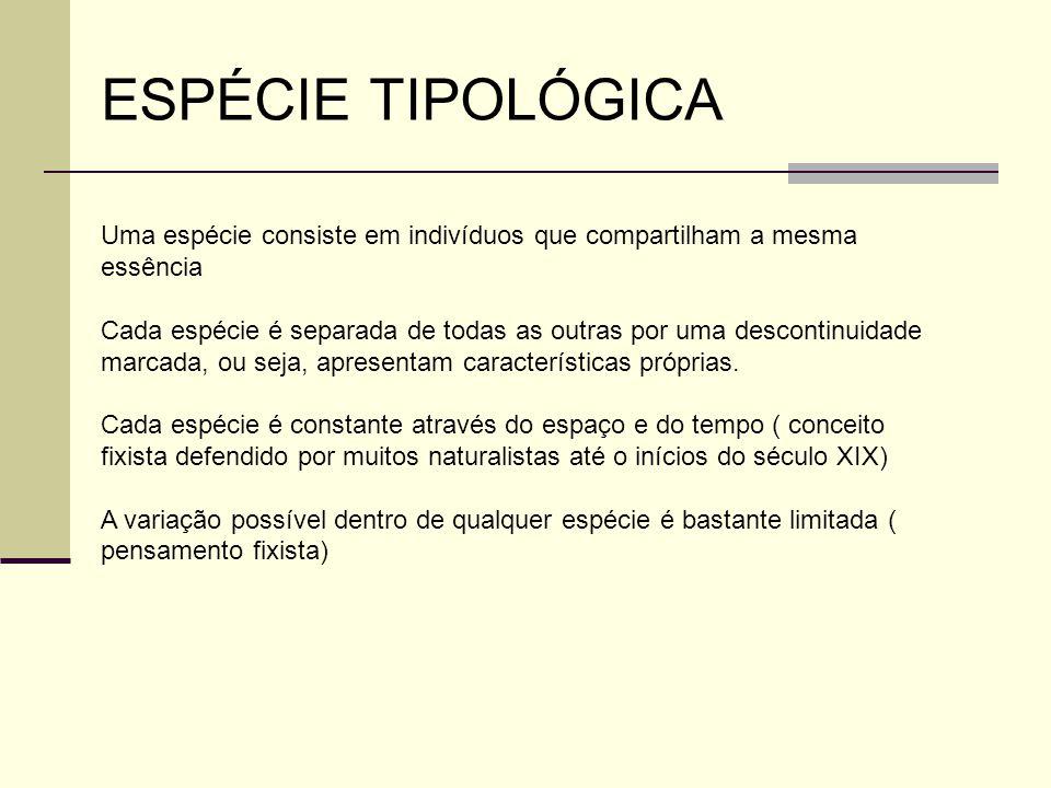 ESPÉCIE TIPOLÓGICA Uma espécie consiste em indivíduos que compartilham a mesma essência Cada espécie é separada de todas as outras por uma descontinuidade marcada, ou seja, apresentam características próprias.