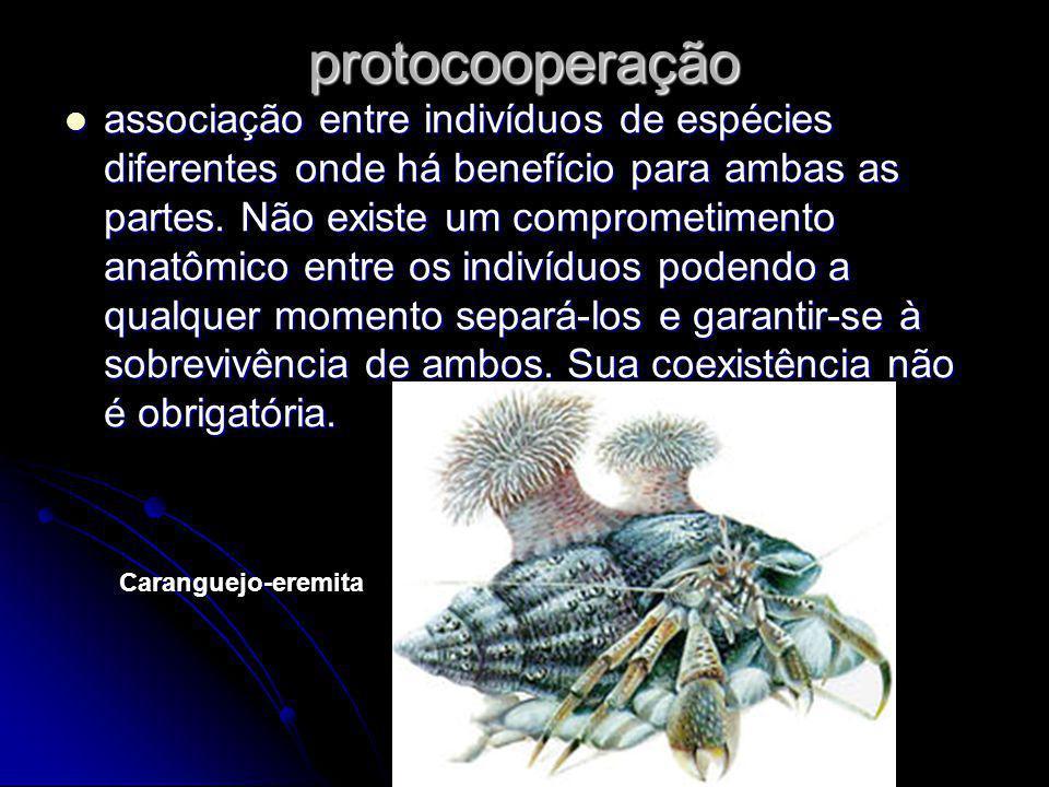 protocooperação associação entre indivíduos de espécies diferentes onde há benefício para ambas as partes. Não existe um comprometimento anatômico ent