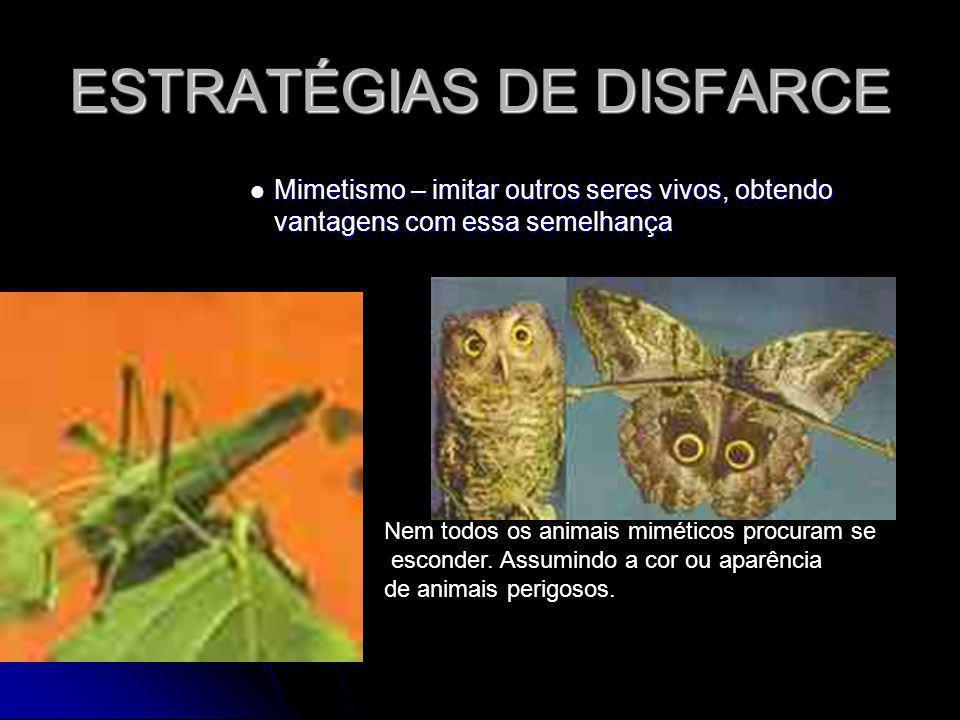 ESTRATÉGIAS DE DISFARCE Mimetismo – imitar outros seres vivos, obtendo vantagens com essa semelhança Mimetismo – imitar outros seres vivos, obtendo va