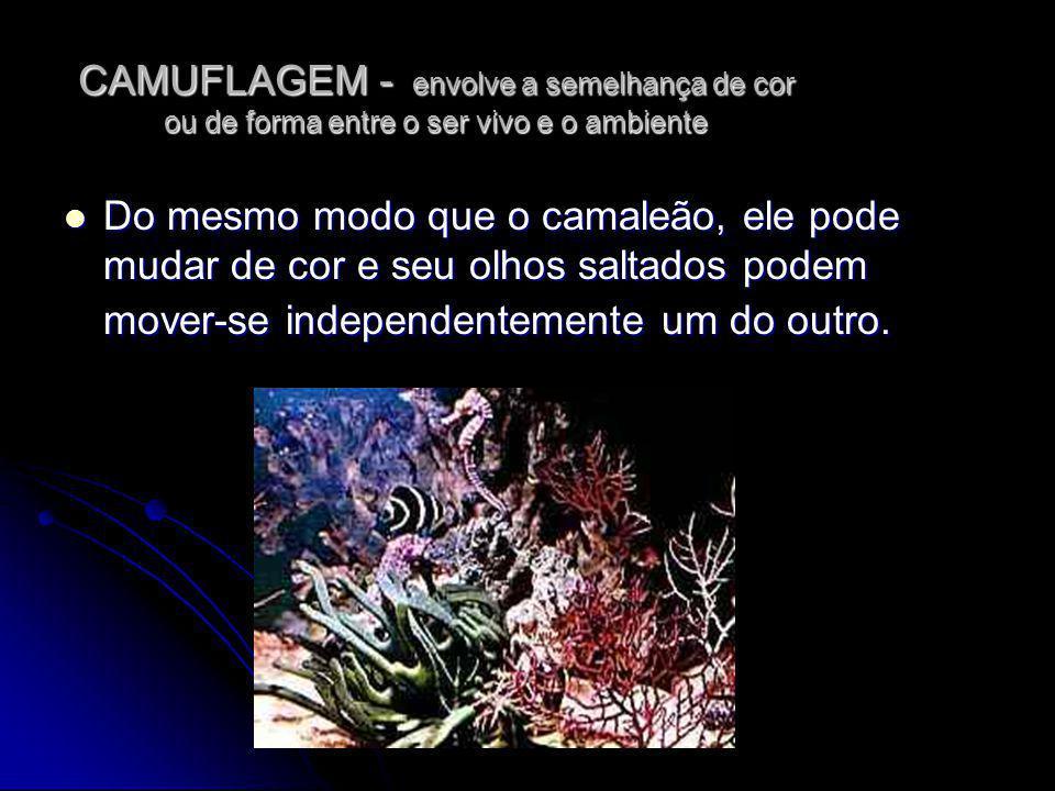 CAMUFLAGEM - envolve a semelhança de cor ou de forma entre o ser vivo e o ambiente Do mesmo modo que o camaleão, ele pode mudar de cor e seu olhos sal