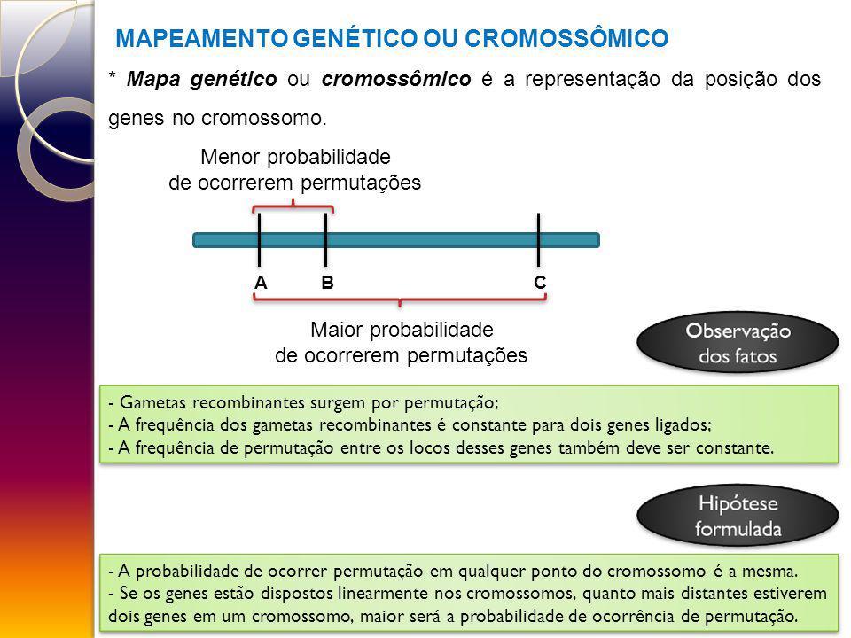 MAPEAMENTO GENÉTICO OU CROMOSSÔMICO * Mapa genético ou cromossômico é a representação da posição dos genes no cromossomo. ABC Menor probabilidade de o