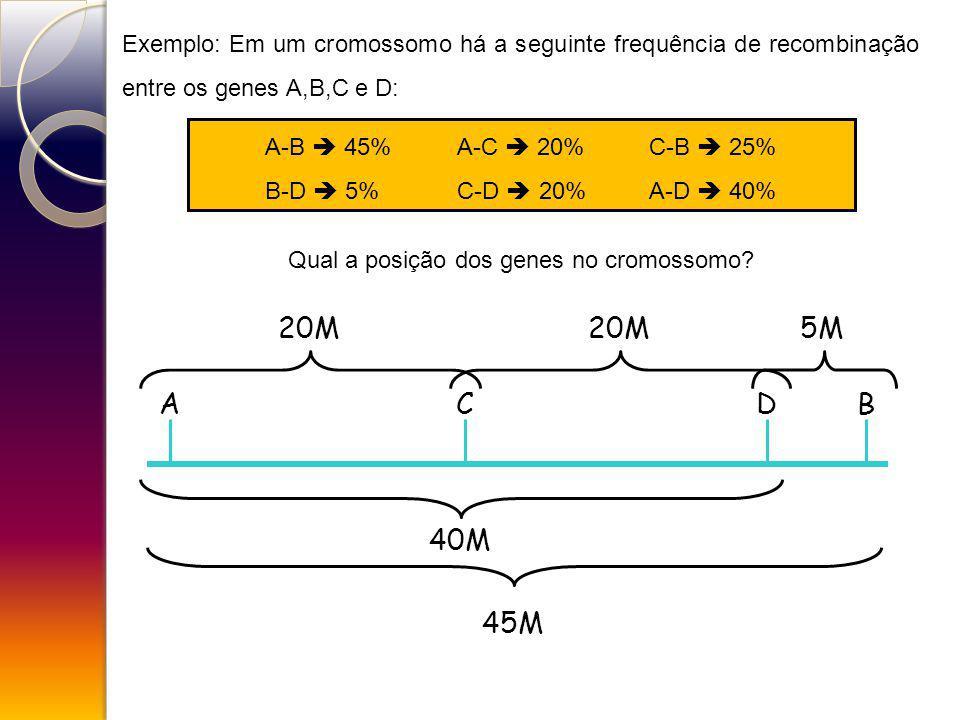 Exemplo: Em um cromossomo há a seguinte frequência de recombinação entre os genes A,B,C e D: A-B 45%A-C 20%C-B 25% B-D 5%C-D 20%A-D 40% Qual a posição