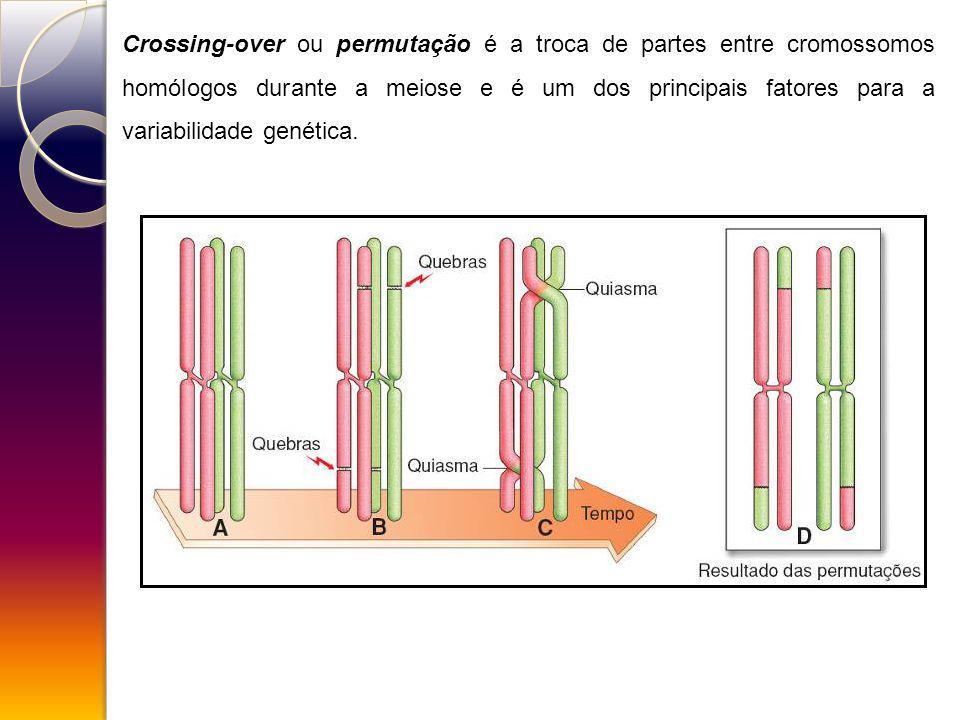 Crossing-over ou permutação é a troca de partes entre cromossomos homólogos durante a meiose e é um dos principais fatores para a variabilidade genéti