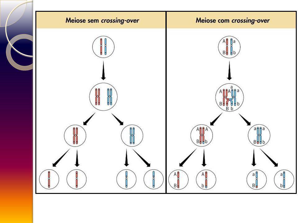 CASO DE LIGAÇÃO GÊNICA EM Drosophila melanogaster P, p (cor do corpo) V, v (forma da asa) P = cinzento-amarela p = preto V = alongada v = vestigial (reduzida)