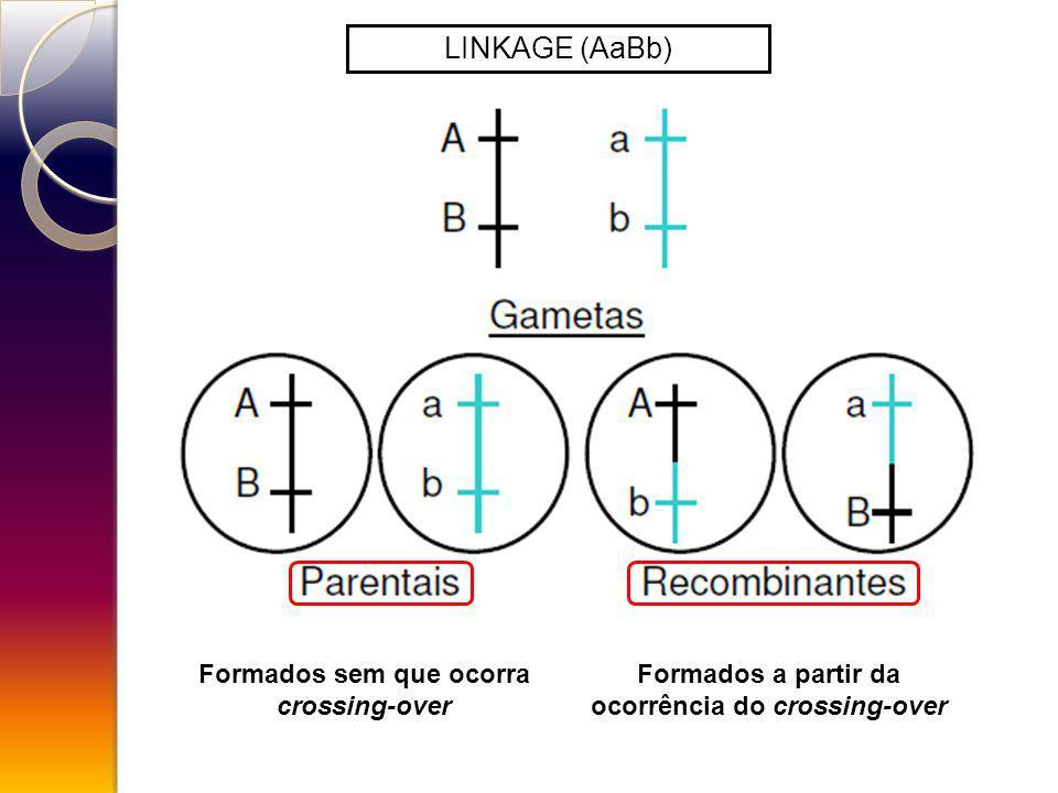 LINKAGE (AaBb) Formados sem que ocorra crossing-over Formados a partir da ocorrência do crossing-over