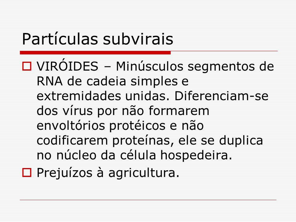 Partículas subvirais VIRÓIDES – Minúsculos segmentos de RNA de cadeia simples e extremidades unidas. Diferenciam-se dos vírus por não formarem envoltó