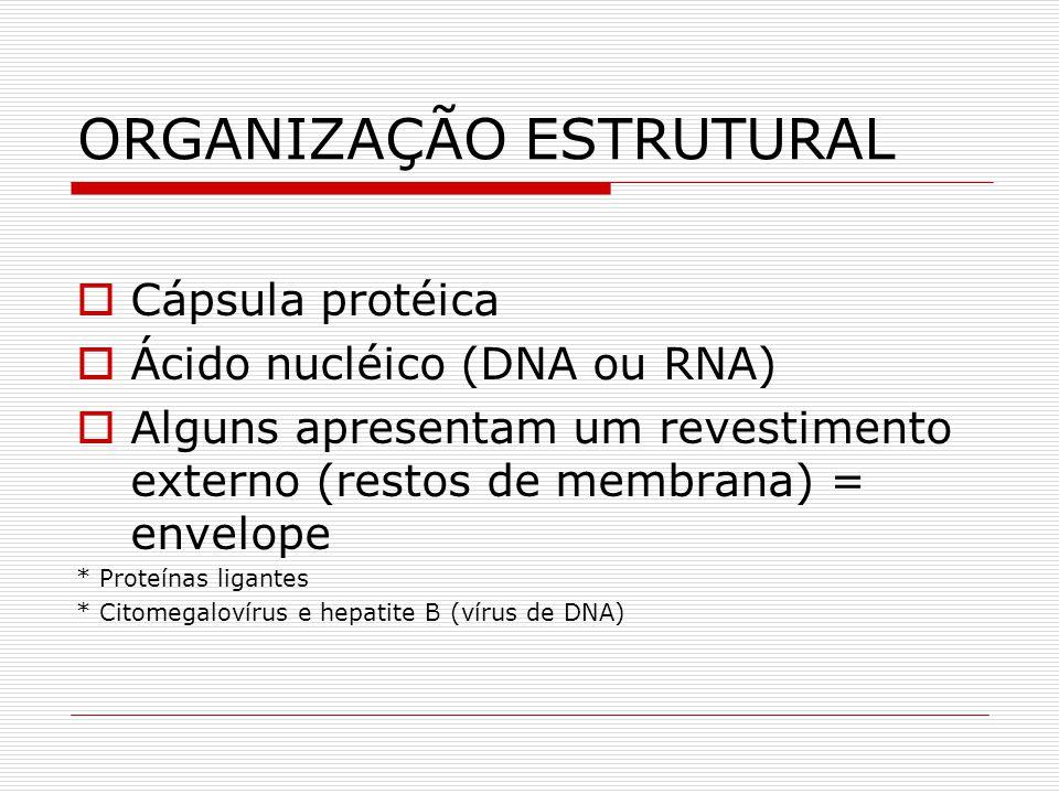 ORGANIZAÇÃO ESTRUTURAL Cápsula protéica Ácido nucléico (DNA ou RNA) Alguns apresentam um revestimento externo (restos de membrana) = envelope * Proteí