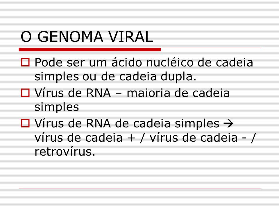 O GENOMA VIRAL Pode ser um ácido nucléico de cadeia simples ou de cadeia dupla. Vírus de RNA – maioria de cadeia simples Vírus de RNA de cadeia simple