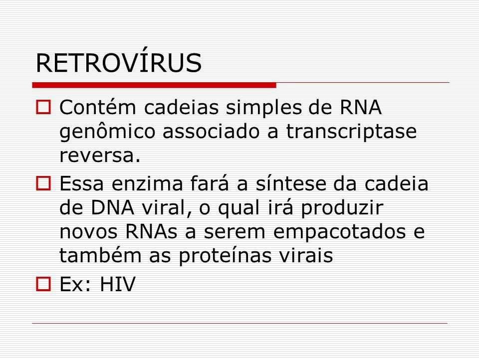 RETROVÍRUS Contém cadeias simples de RNA genômico associado a transcriptase reversa. Essa enzima fará a síntese da cadeia de DNA viral, o qual irá pro