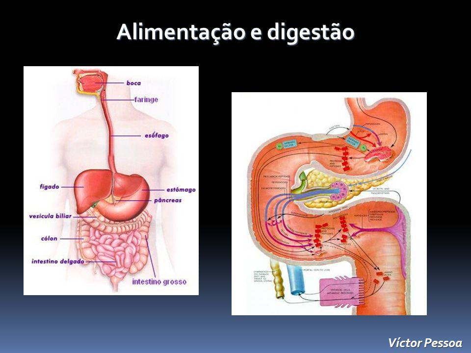 Alimentação e digestão Víctor Pessoa