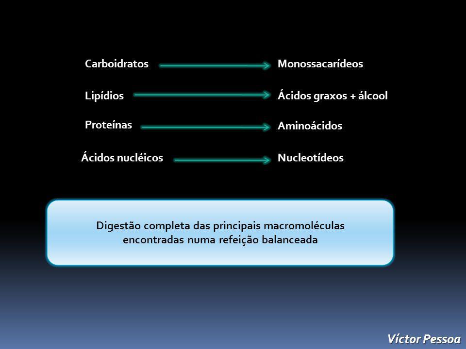 CarboidratosMonossacarídeos Lipídios Ácidos graxos + álcool ProteínasAminoácidos Nucleotídeos Ácidos nucléicos Digestão completa das principais macromoléculas encontradas numa refeição balanceada