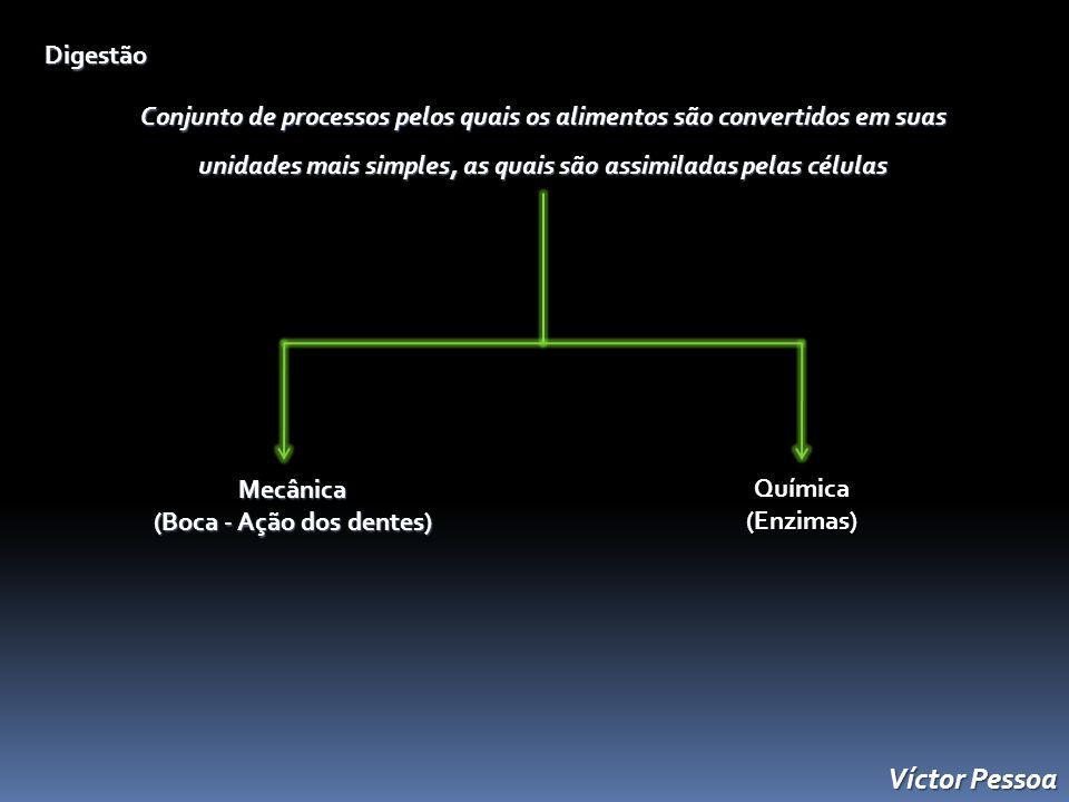 Digestão Conjunto de processos pelos quais os alimentos são convertidos em suas unidades mais simples, as quais são assimiladas pelas células Mecânica (Boca - Ação dos dentes) Química(Enzimas) Víctor Pessoa