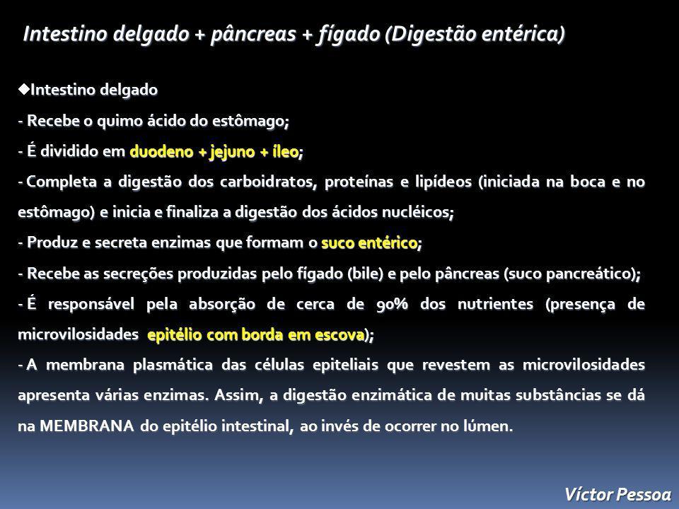 Víctor Pessoa Intestino delgado + pâncreas + fígado (Digestão entérica) Intestino delgado - Recebe o quimo ácido do estômago; - É dividido em duodeno + jejuno + íleo; - Completa a digestão dos carboidratos, proteínas e lipídeos (iniciada na boca e no estômago) e inicia e finaliza a digestão dos ácidos nucléicos; - Produz e secreta enzimas que formam o suco entérico; - Recebe as secreções produzidas pelo fígado (bile) e pelo pâncreas (suco pancreático); - É responsável pela absorção de cerca de 90% dos nutrientes (presença de microvilosidades epitélio com borda em escova); - A membrana plasmática das células epiteliais que revestem as microvilosidades apresenta várias enzimas.