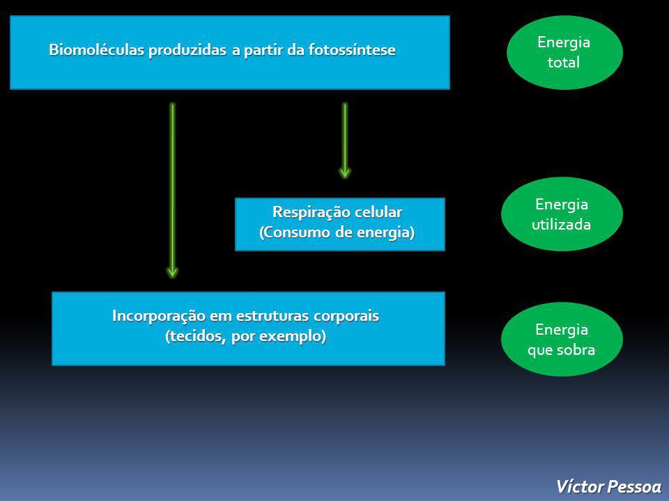 Biomoléculas produzidas a partir da fotossíntese Biomoléculas produzidas a partir da fotossíntese Respiração celular (Consumo de energia) Incorporação em estruturas corporais (tecidos, por exemplo) Energia total Energia utilizada Energia que sobra Víctor Pessoa