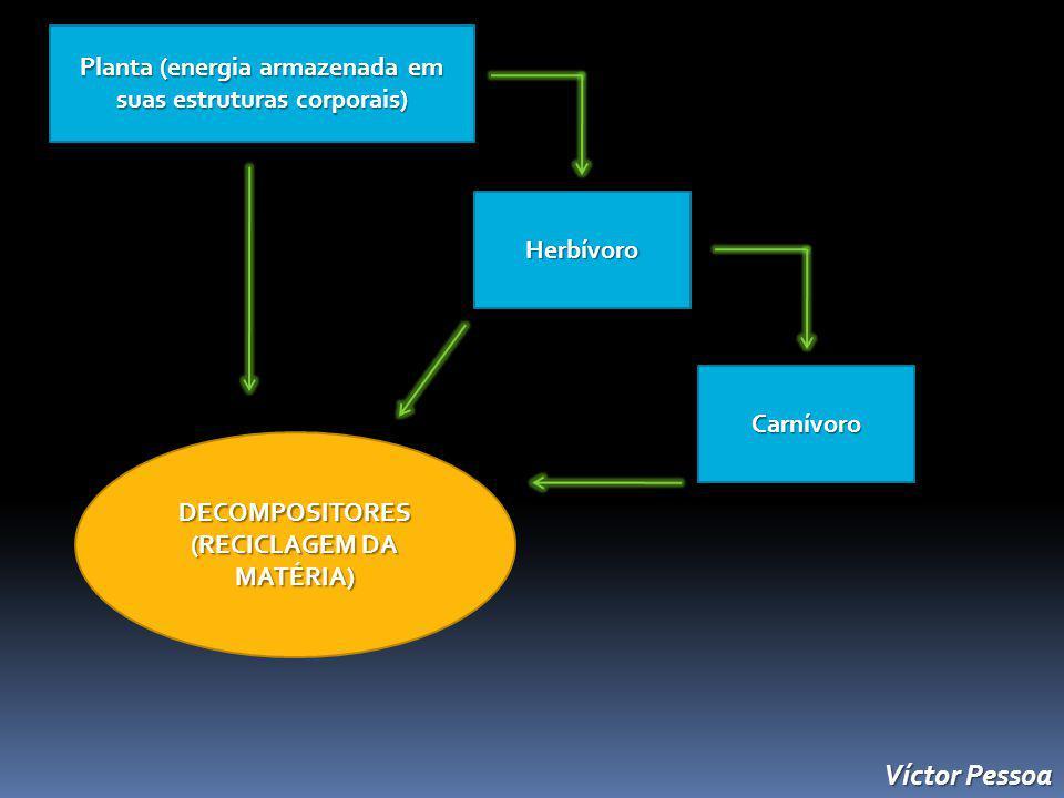 Planta (energia armazenada em suas estruturas corporais) Herbívoro Carnívoro DECOMPOSITORES (RECICLAGEM DA MATÉRIA) Víctor Pessoa