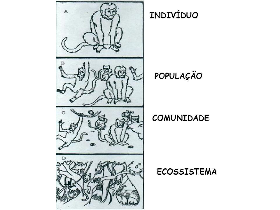 INDIVÍDUO POPULAÇÃO COMUNIDADE ECOSSISTEMA