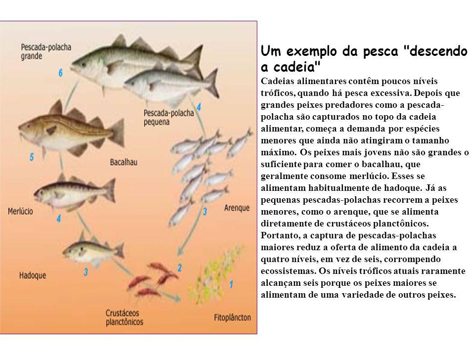 Um exemplo da pesca