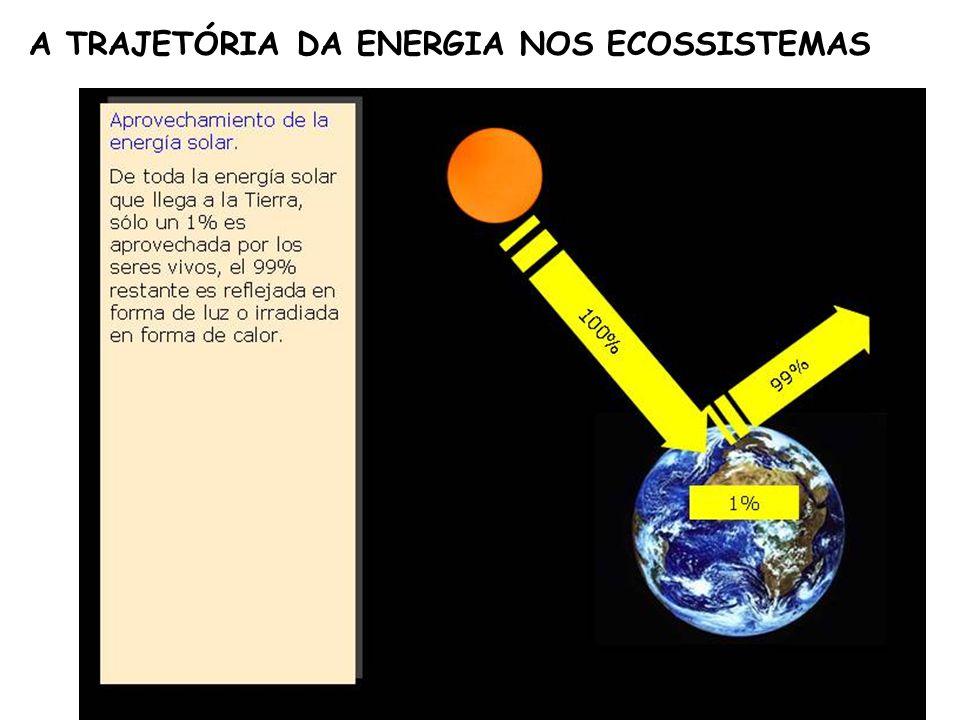 A TRAJETÓRIA DA ENERGIA NOS ECOSSISTEMAS