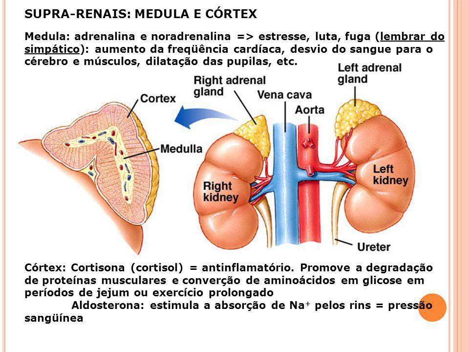 Regulação dos níveis de Ca 2+ sangüíneo- Paratôrmonio Paratireóides Tireóide Retroalimentação negativa Aumento da absorção de Ca 2+ no intestino devid