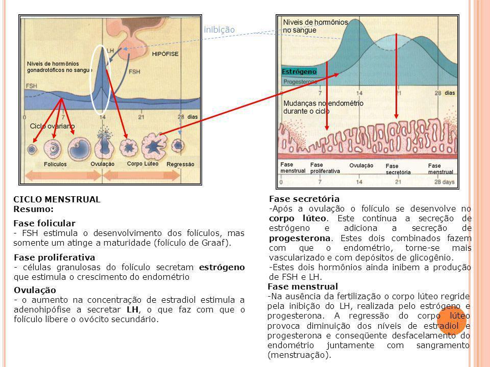 O VÁRIOS Estrógeno Progesterona