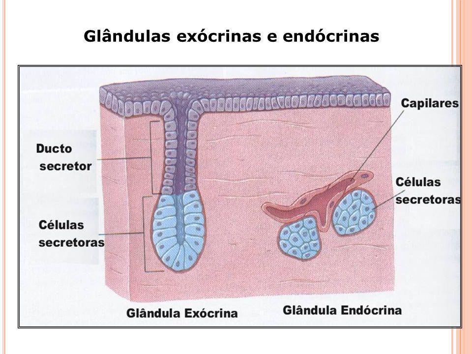 É importante lembrar que existem três tipos de glândulas num organismo: endócrinas, exócrinas, e anfícrinas (mistas). As glândulas endócrinas produzem