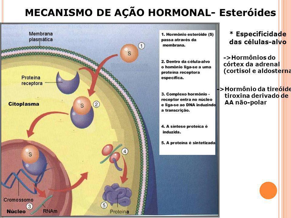 AÇÃO HORMONAL