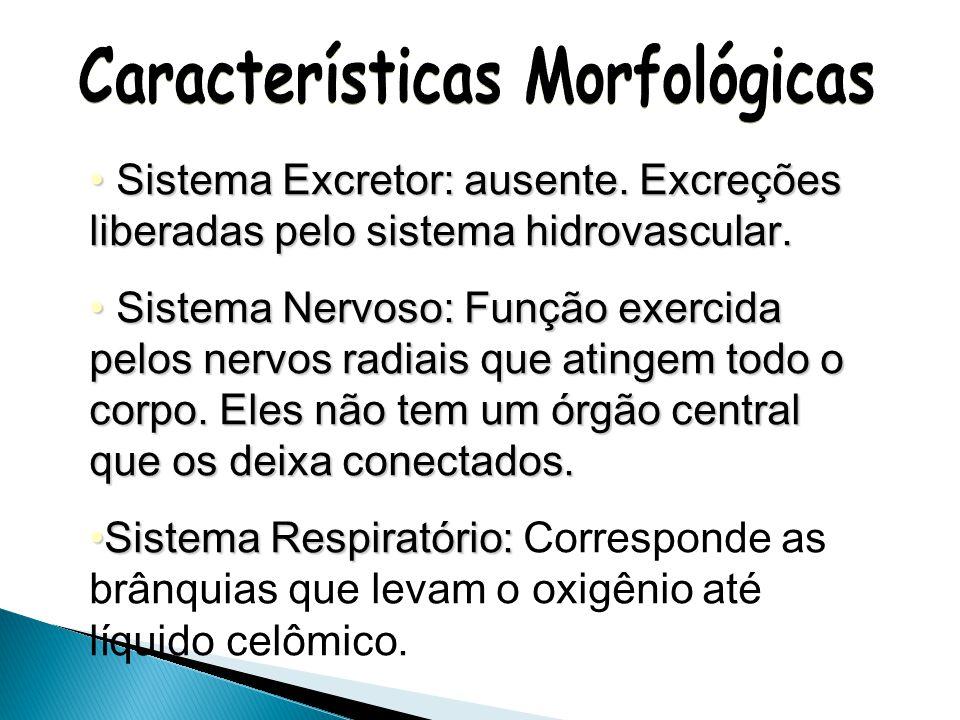Sistema Digestivo: completo (boca, esôfago, estômago, intestino e ânus) e digestão é extracelular.