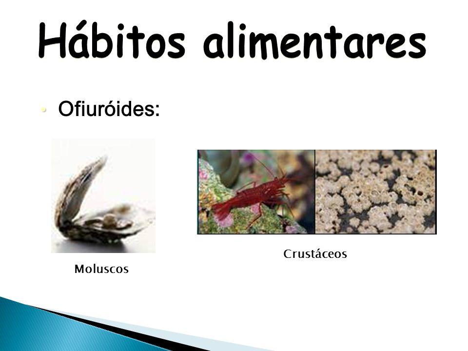 Asteróides: Esponja BivalvesCaranguejos Corais Poliquetas Estrelas-do-mar menores Algumas também comem peixes e invertebrados mortos.